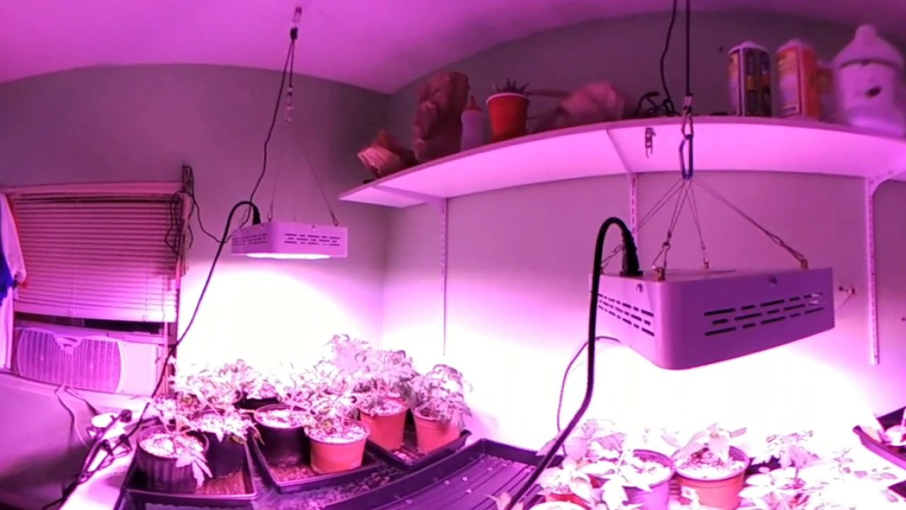360 Degree Video The Best Led Grow Light For Tomatoes And Peppers Mars 300