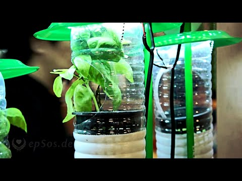 Hydroponic Farming System in Plastic Bottles and LED Lamps.