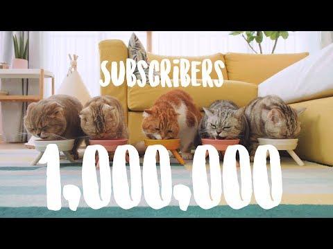 1-mil-subscribers-100만구독자-카운트다운-수리노을-고양이가족-live-suri