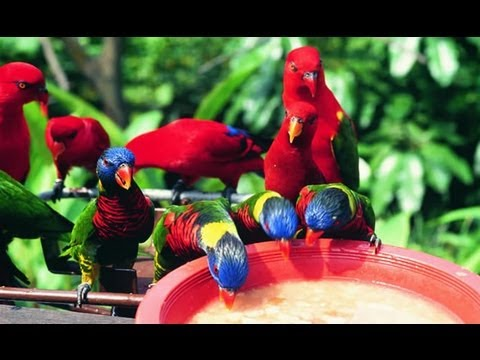 Jurong Bird Park @Singapore - YouTube