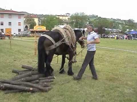 Come trasportare legna a dorso di youtube for Foto di zig e sharko