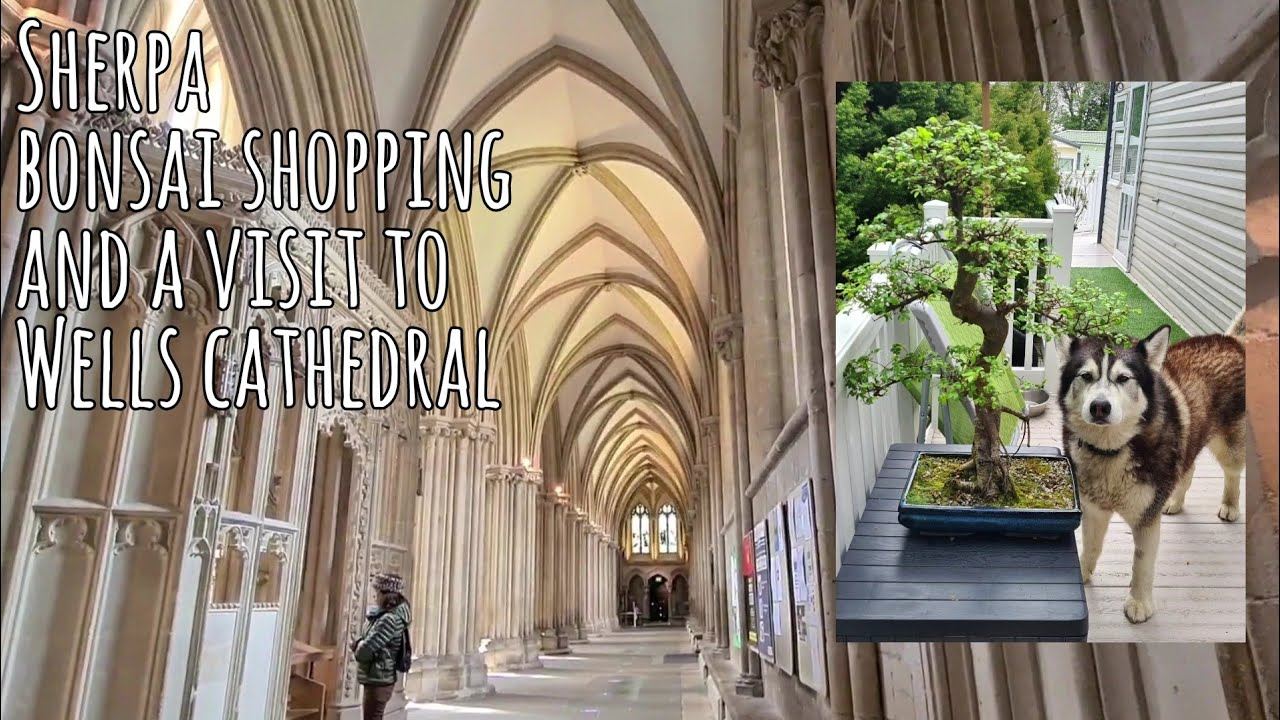 A visit to a Lovely Japanese Bonsai shop and Wells Cathedral