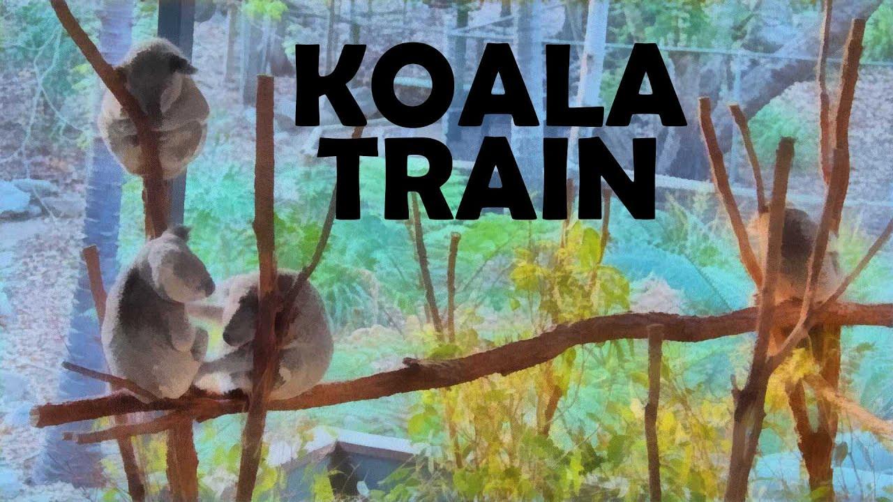 Lone Pine Koala Train   🚂🚃🐨🐨🐨🚃