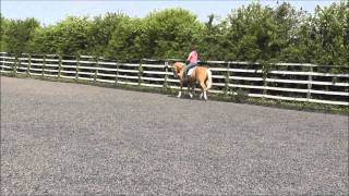 Treliver Daydream- Sport Horse Select