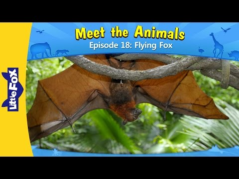 Meet the Animals 18: Flying Fox | Level 2 | By Little Fox