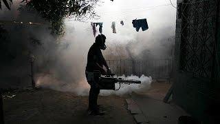 «الزعاج المصري» يغزو أمريكا اللاتينية.. كل ما تريد معرفته عن وباء «زيكا» - ساسة بوست