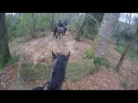 The Bray Harriers Glenealy Hunt 21 01 2017