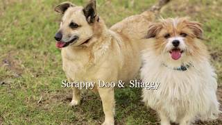 Scrappy Doo & Shaggy - Available for Adoption
