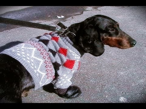 Waou 2 How To Make A Dog Sweater And Boots Youtube