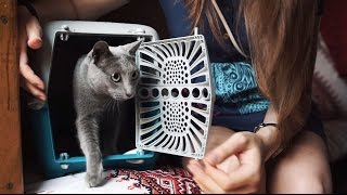 Способы перевозки кошек ➠ Автобусом & поездом & самолётом