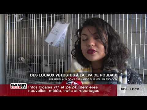 La Ligue Protectrice Des Animaux De Roubaix En Péril