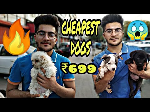 CHEAPEST Dogs 😱