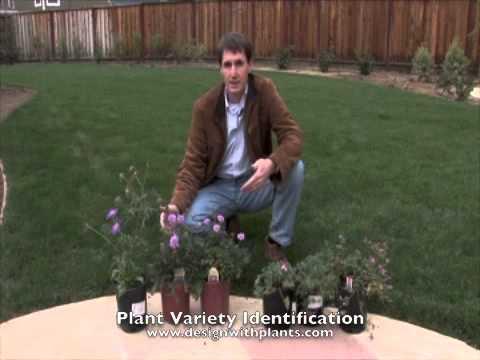 Plant Variety Identification