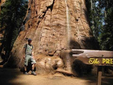 SEQUOIA The Largest Living Tree on Earth, General Sherman & The President