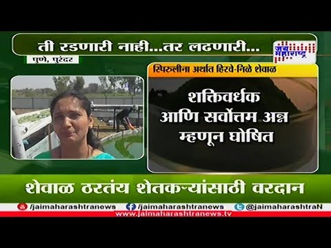 Shetimitra: Success story of women farmer Spirulina farming 060318