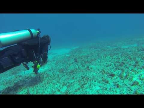 Hawaii Trip - Scuba Dive #1 - D's Underwater Navigation