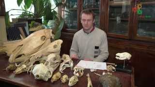 Зоология позвоночных. Строение зубов млекопитающих (Шахпоронов В.В.)
