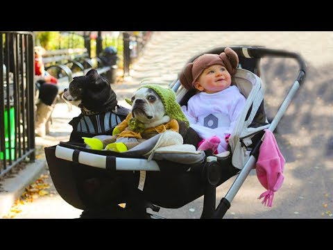 Dog loves baby   Try Not To Laugh When Baby Playing With Dog In Stroller