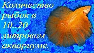 Количество рыбок в 10..20 литровом аквариуме.