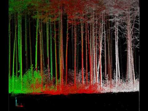Terrestrial Laser Scanning of Trees and Forest Stands