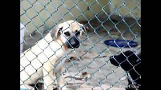 Спасенные мною животные.  Часть 2. Собаки, которым был подарен судьбой шанс на жизнь.