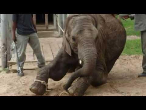 Elephants of Eden and Knysna Elephant Park accused of animal cruelty