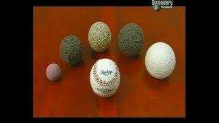 Бейсбольные мячи    Как это работает