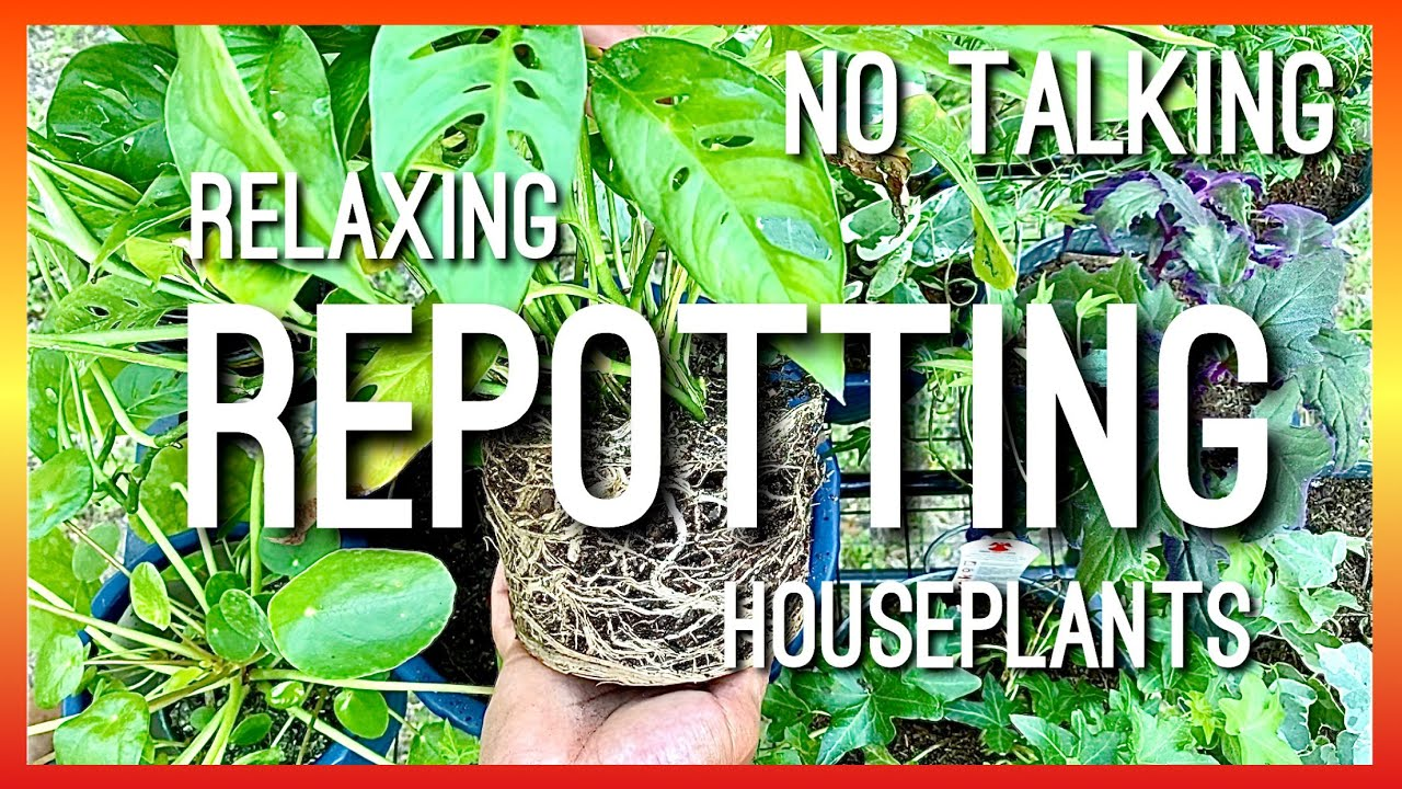 REPOTTING OUTDOORS W/ THE BIRDS/NO TALKING JUST REPOTTING HOUSEPLANTS OUTSIDE HEARING THE BIRDS/ASMR