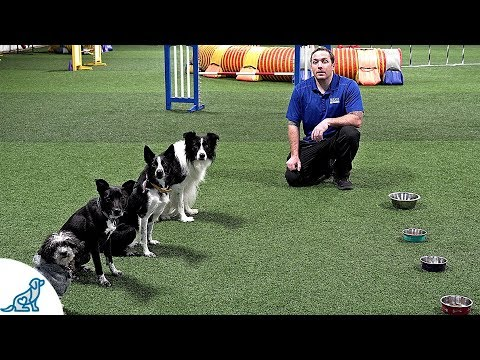 How To Train Your Dog To Wait Before Eating - Professional Dog Training Tips