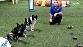 How To Train Your Dog To Wait Before Eating  Professional Dog Training Tips
