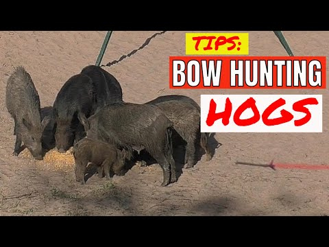 Bow Hunting Hogs - Lead Sow (2 Pigs, 1 Trip)