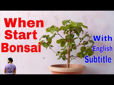 बोन्साई कब और कैसे शुरू करे /How to Start Bonsai Tree /Bonsai Tips -28th May 2017/ Mammal Bonsai