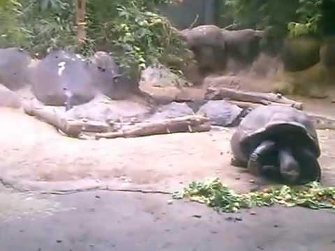 diergaarde blijdorp rotterdam zoo 21 juni 2015