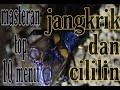 Masteran Kasar Full Jangkrik Cililin Gacor Durasi Panjang  Mp3 - Mp4 Download