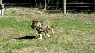 How To Train Your Dog To Come When Called Off Leash Dogtra E Pager Collar