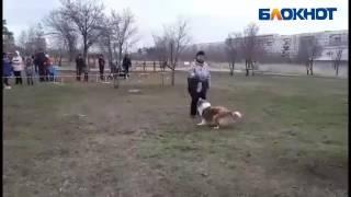 """""""Пушистое шоу"""" соревнования собак в Волжском"""