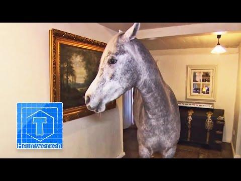 Haus-Pferd   Tiere   ToolTown