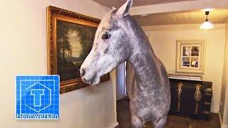 Haus-Pferd | Tiere | ToolTown