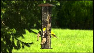 Video Perky-Pet® Squirrel-Be-Gone® Wild Bird Feeder download MP3, 3GP, MP4, WEBM, AVI, FLV Juli 2018