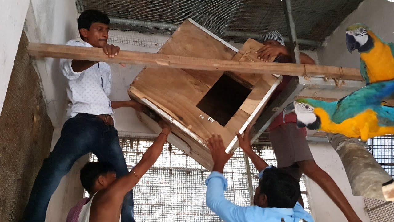 Macaws Breeding Box Nest Box Cages Setup / Big Parrots Breeding Setup Guide & Tips.