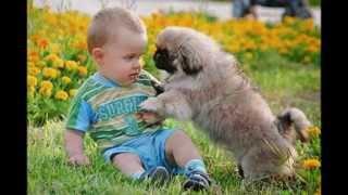 Дети и домашние животные дружба навсегда