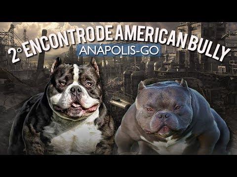 2º ENCOTRO DE AMERICAN BULLY EM ANÁPOLIS-GO | PARQUE JK