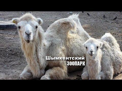Шымкентский ЗООПАРК