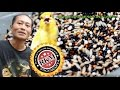 Suara Burung Rahasia Bikin Kenari Gacor Ala Pakan Rkm  Mp3 - Mp4 Download