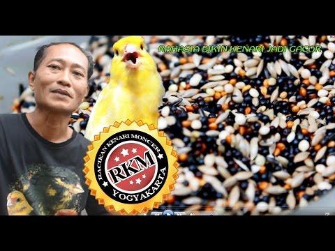 Download Lagu SUARA BURUNG : Rahasia Bikin Kenari Gacor Ala Pakan RKM