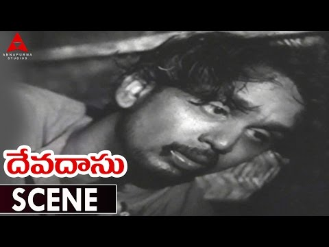Devadasu Movie || Akkineni Nageswara Rao Death Scene || ANR,Savitri