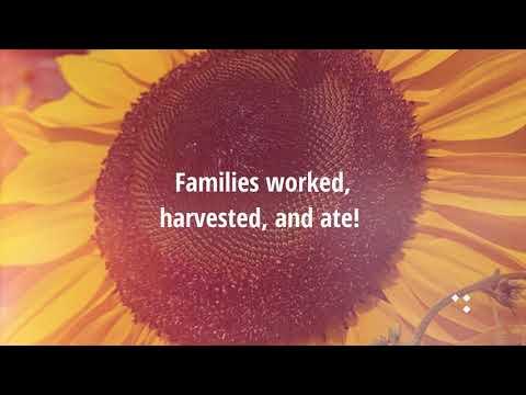 Reflections on 2020 Kidston garden summer/ fall season 2020