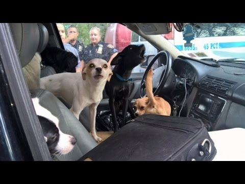 Two Dozen Dogs Trapped In A Car Are Rescued From The Sweltering Heat