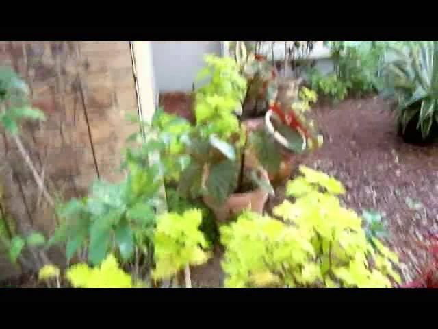 Getting Ready S22W06: Big Momma Judes Gardens
