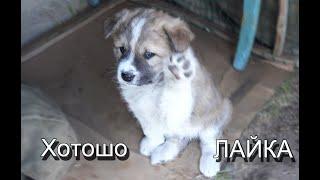 Кино про собак Отдаю недорого почти 1 5 месяца